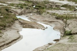 New research shows that bacteria and microorganisms found in muddy marshes and coastal mud effectively cool the warming coastal climate.