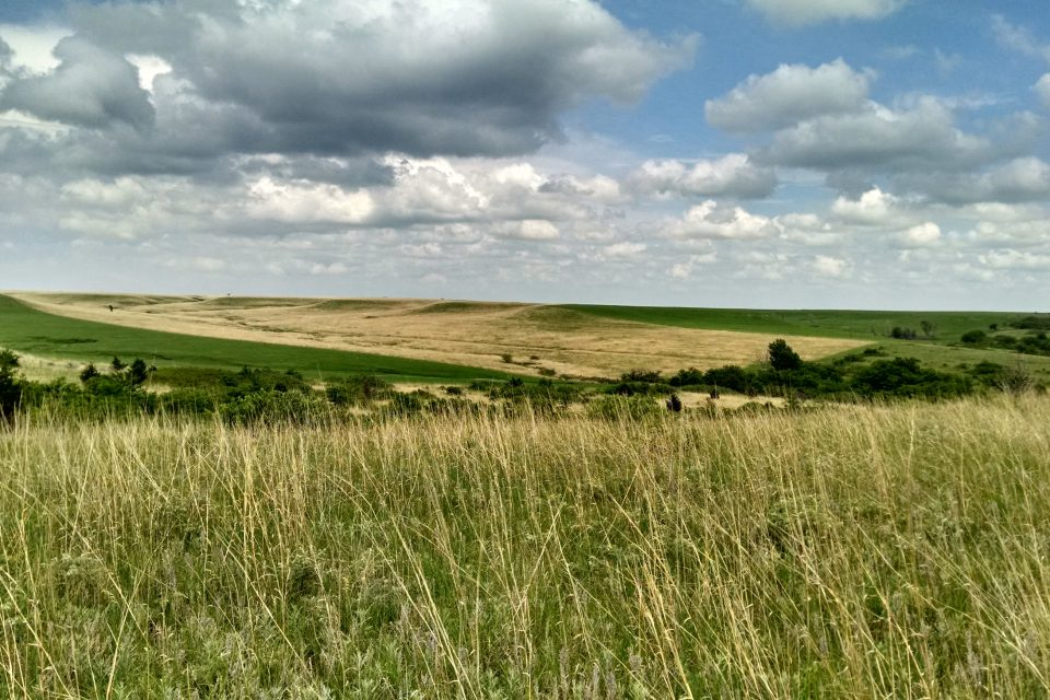 Grasslands make up more than 40 percent of all ice-free land on Earth, and thousands of species depend on grassland habitats, including humans.