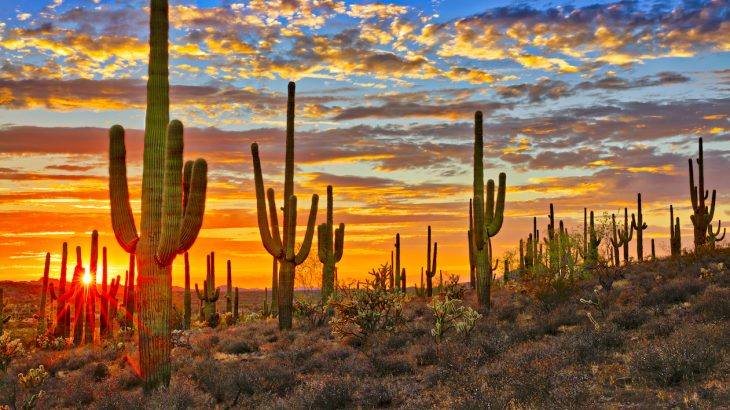 The unusually dry monsoon season in the Sonoran Desert reveals the danger of blaming climate change for every irregular weather phenomena.