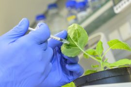 A team of scientists has developed a new method which may ultimately make it easier to immunize plants for protection against viruses.
