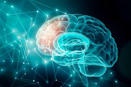 """Experts at the Allen Institute for Brain Science have categorized brain cell types to produce the most detailed """"parts list"""" of the human brain to date."""