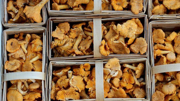 farmer's market, chanterelle