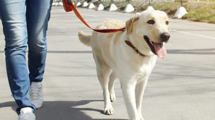 According to new research, dog ownership is associated with better cardiovascular health.