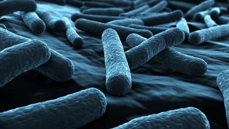 E. coli strains that are toxic to humans may be evolving to better thrive in the gut flora of cattle.
