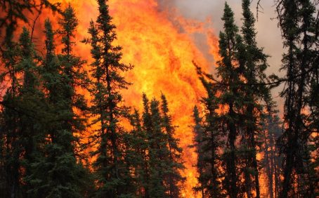A team of researchers led by the Berkeley Lab has determined that the combination of climate change and increased wildfires could permanently change the composition of forests in Alaska.