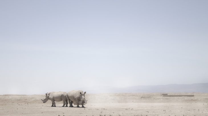 Scientists were successful in harvesting eggs from the last two northern white rhinos in the world.
