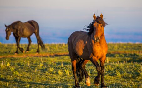 """The plan calls for removing wild horses from rangeland to """"more cost-effective pasture facilities"""" and fertility control for up to 90% of free range mares."""