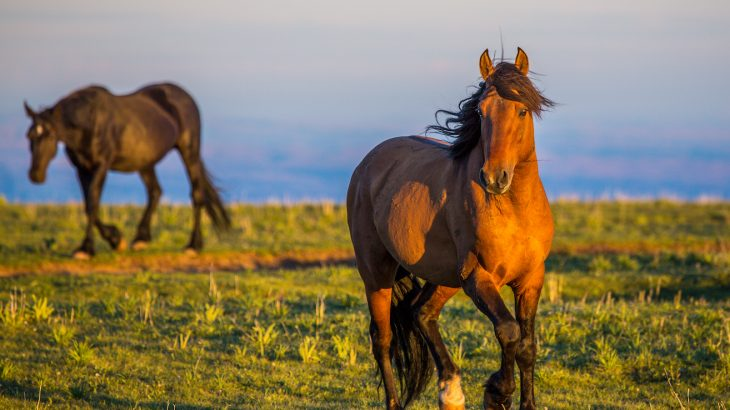 "The plan calls for removing wild horses from rangeland to ""more cost-effective pasture facilities"" and fertility control for up to 90% of free range mares."