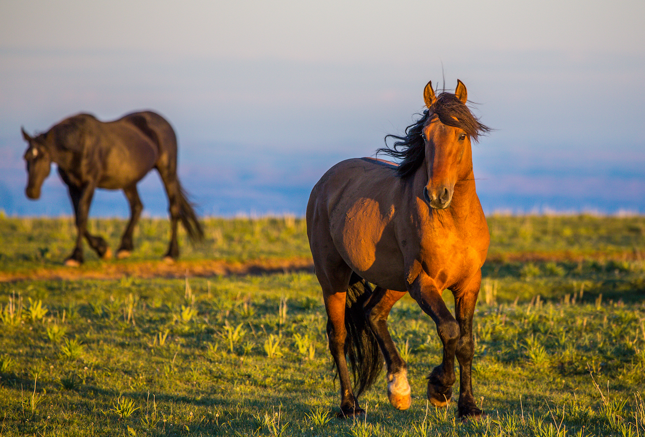 Government Plan To Manage Wild Horse Populations Comes Under Fire Earth Com