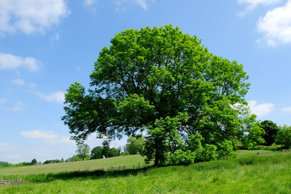 Professor Matthew Evans from the University of Hong Kong created a computer model to estimate how ash dieback (ADB) disease may affect the UK's 125 million ash trees.