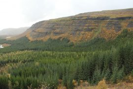 forest iceland reforestation