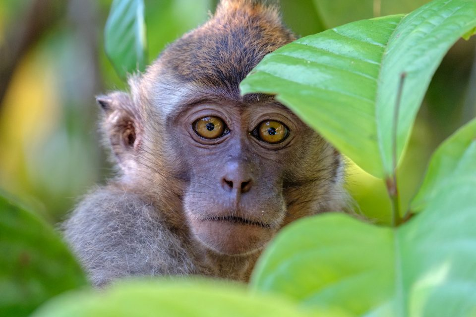 Experts are urging animal behavior scientists to increase their involvement in the animal ethics conversation.