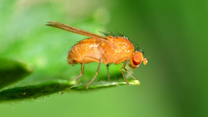 The diverse diet of the fruit fly is tied to the fly's flexible response to carbohydrates, which provides new insight into how the human diet evolved.
