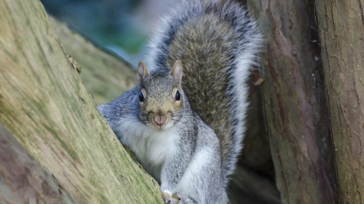 In a new study, researchers from Oberlin College found that squirrels take their cues from birds by listening in on bird conversations.