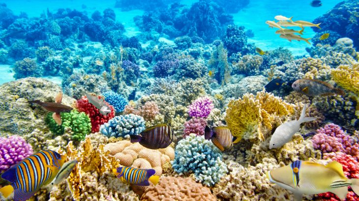 Even as coral reefs decline overall, their ability to move northward shows amidst warming waters some potential for their long term survival.