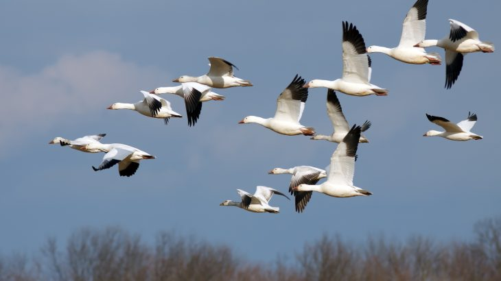 Birds that can sense the Earth's magnetic field are provided with important navigational information, such as a sense of direction that is associated with the field.
