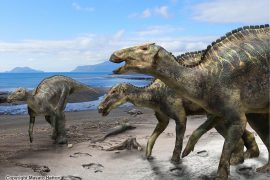 Archaeologists in Japan have unearthed a nearly-complete 72-million-year-old fossil of a crested dinosaur.