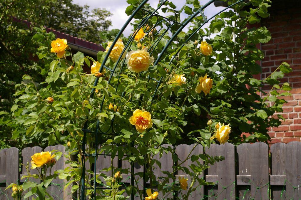 english garden, rose trellis