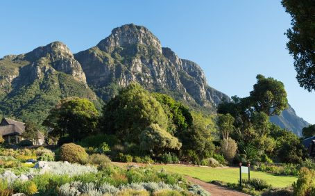 Plant Blindness Education, Kirstenbosch Botanic Garden