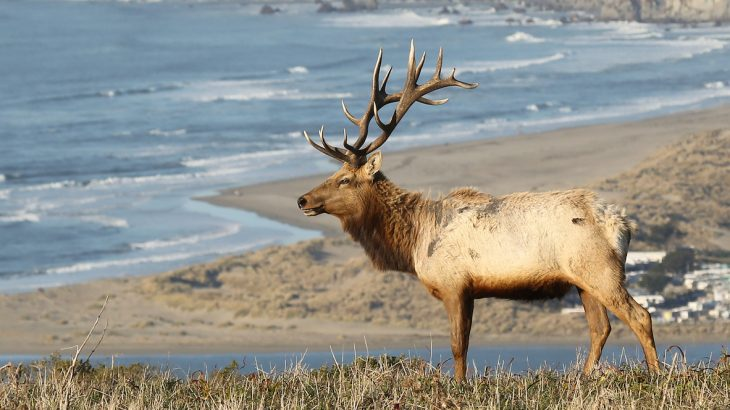 New National Park Service plans highlight the inherent conflict between ranching and elk populations at Point Reyes National Seashore.