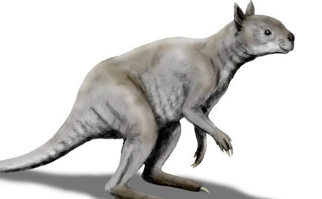 Prehistoric giant sthenurine kangaroos were highly adapted with jaws powerful enough to devour tough foods like mature leaves, stems, and branches.