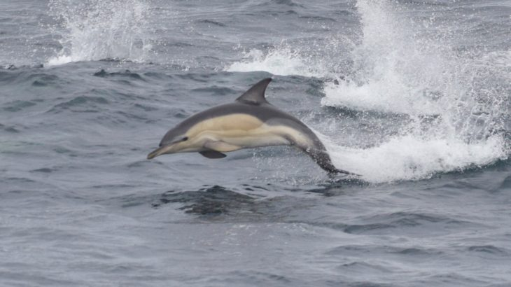 Mercury and other high concentrations of pollutants were discovered in the skin and blubber of bottlenose dolphins that live in the English Channel.