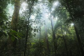 jungle, plants, forest, mist