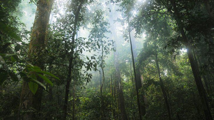 jungle, plants, forest, mist