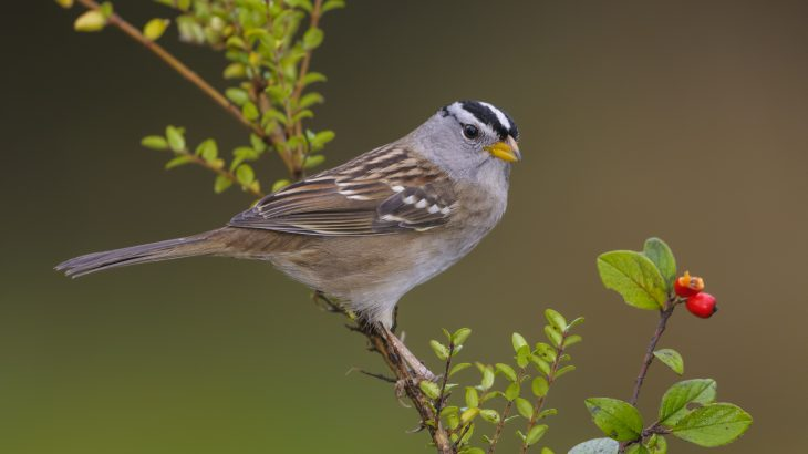 A new study has revealed how a neonicotinoid pesticide may pose a risk to wild songbird populations.
