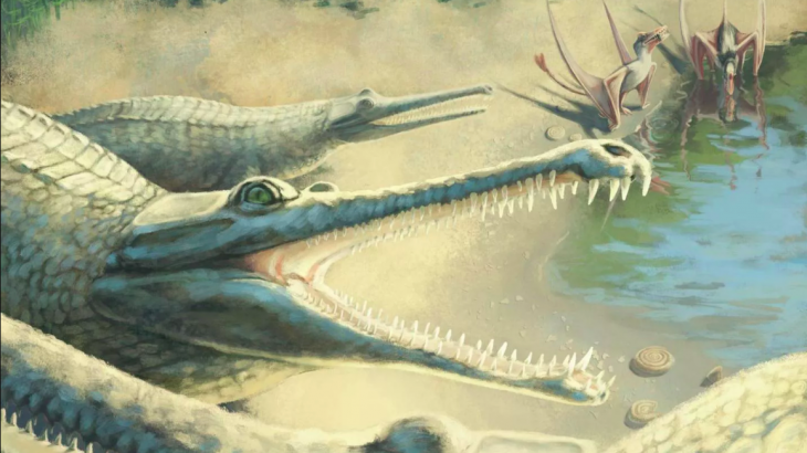 Nearly 250 years after its fossil was discovered in Germany, an 180-million-year-old crocodile has finally been identified as a Mystriosaurus laurillardi.