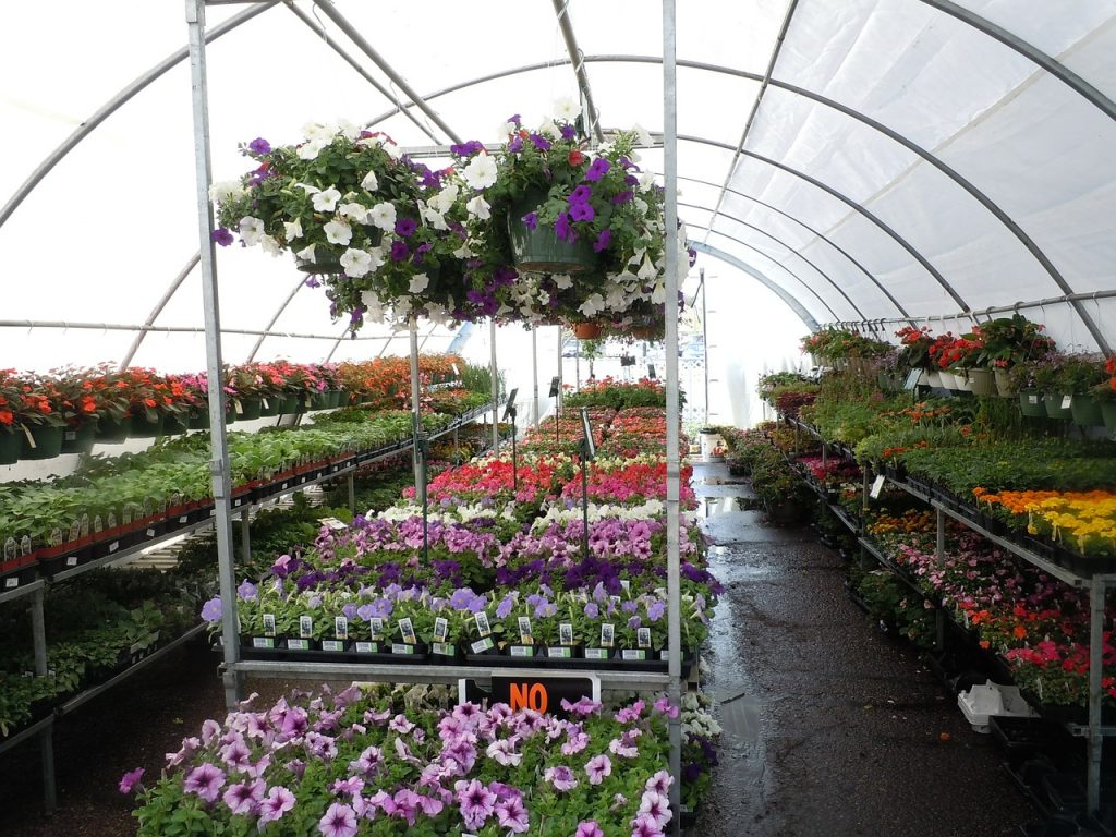 greenhouse, plant nursery