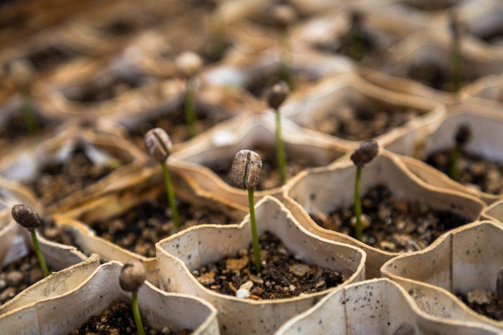 plant starters, nursery