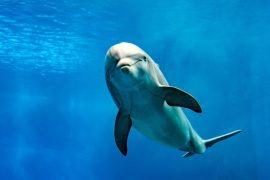 Unexpected levels of antibiotic-resistant diseases have been discovered thriving among bottlenose dolphins in Florida, according to a new study.