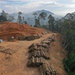 Deforestation in a Malaysian rainforest. The New York Declaration on Forests was created in 2014 with the goal of forest protection, but five years later no progress has been made.