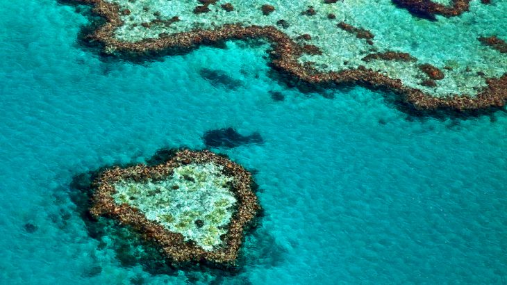 A new report highlights how we do not yet know the consequences of losing coral reefs or how ocean habitats will function without them.
