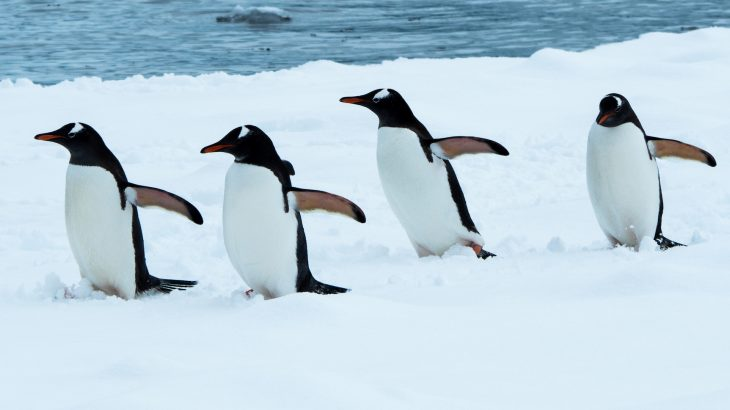 Recent genome sequencing will promote many areas of research, from penguin evolution to the impact of human activities and environmental changes.