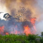 Large parts of the Amazon have been burning this year and it's common knowledge that people and profit are largely to blame.