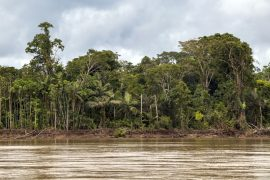 In a new study led by the University of Queensland, researchers have discovered that wilderness areas cut the global risk of species extinction in half.