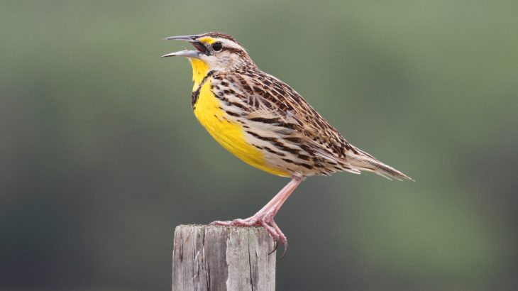 Bird populations in both the United States and Canada have declined 29% (about 3 billion birds) since 1970, thus signaling an ecological crisis.