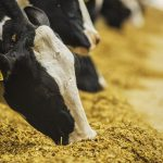Using antibiotics in animal feed to boost growth and prevent disease is contributing to growing rates of antimicrobial resistance in both food animals and humans.