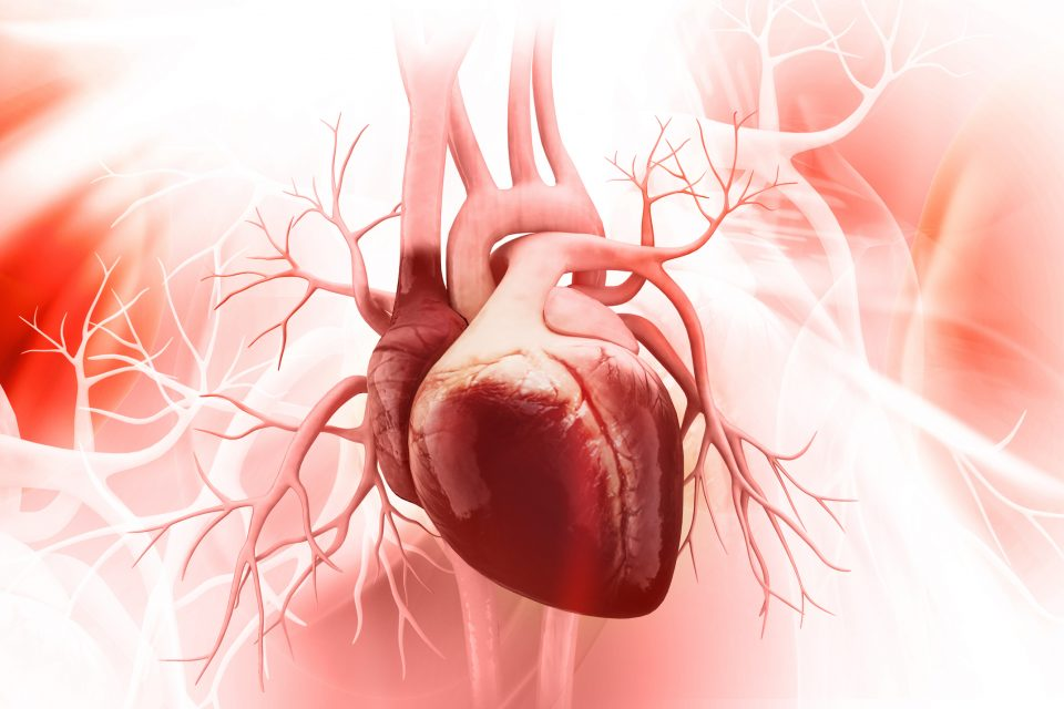According to a new study, the human heart underwent major physical changes as societies shifted from hunter-gatherers to farmers.