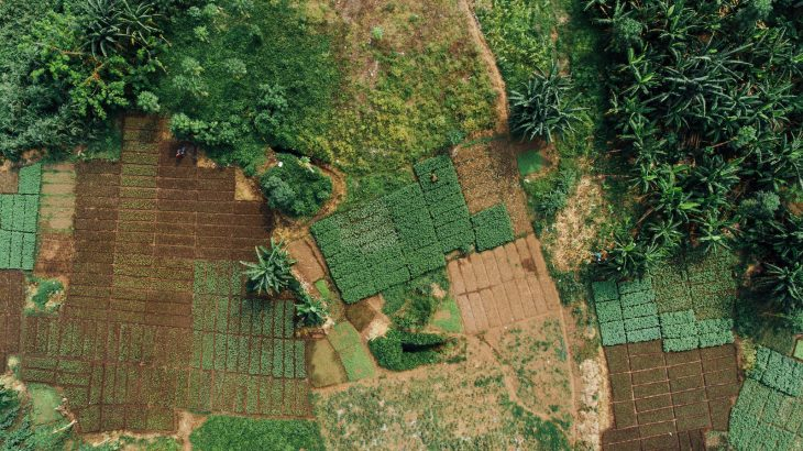 Researchers at Penn State have modified a smartphone application so that it can predict near-term crop productivity for farmers in Africa.