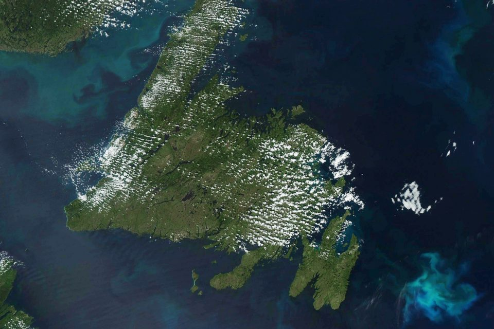 Phytoplankton blooms persist in the North Atlantic