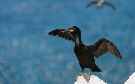 Seabirds that dive into the salty waves to grab tasty morsels of fish aren't looking to the sea for cues but instead watch and copy other diving birds.