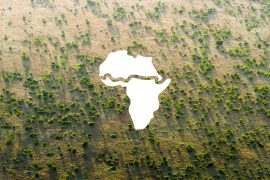 Led by the African Union, the Great Green Wall (GGW) project was launched in 2007 to combat the effects of climate change.