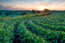 Several candidates have focused much of their attention on Iowa, where climate change is severely threatening the future of agriculture.