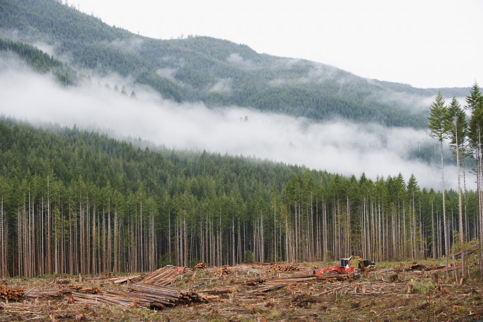 While there have been efforts to stem the tide of global deforestation and its devastating effects, the progress has been slow going and limited.
