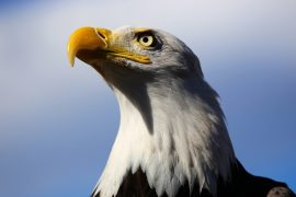 A coalition of attorneys general have come together to sue the Trump administration over rule changes that weaken the Endangered Species Act (ESA).