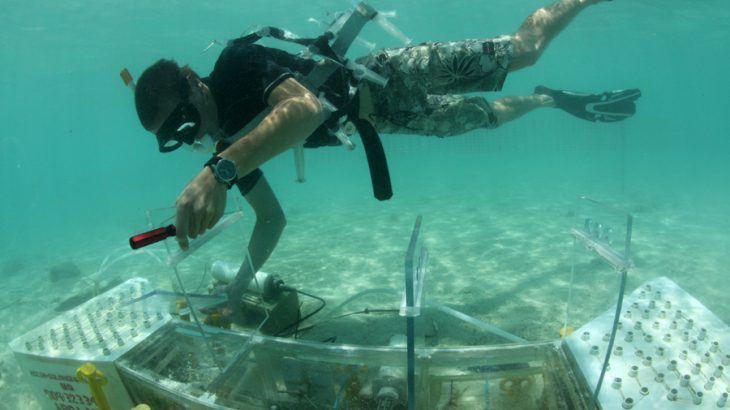 Researchers from the Smithsonian Tropical Research Institute set out to investigate the effects of ocean acidification on coral reef health.