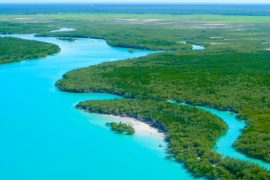 Researchers have quantified the amount of carbon dioxide that is being captured and emitted by Australia's marine ecosystems, which is known as blue carbon.